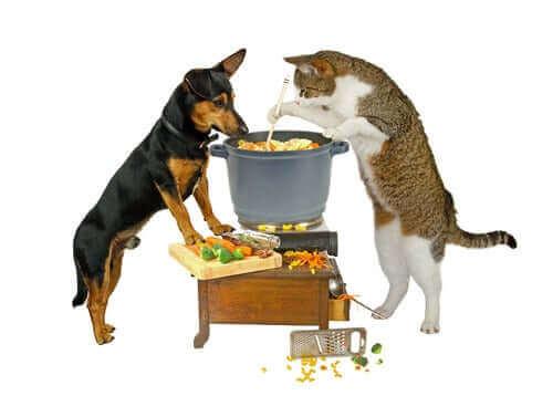 kedi köpekle yemek pişiriyor