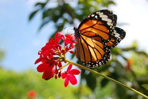 Kral Kelebekleri: İnanılmaz Spiritüel Yolculuğu