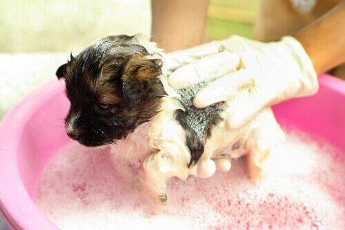 Banyo yapan köpek yavrusu