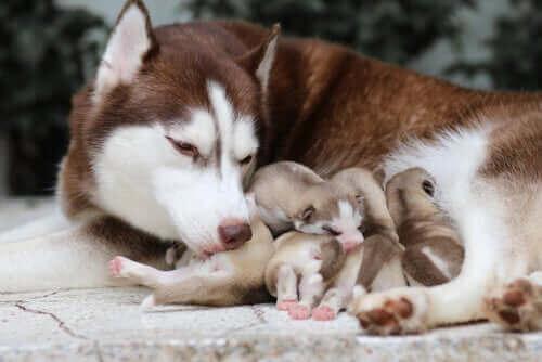 yavrularına bakan anne
