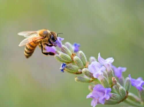 çiçekten bal alan arı