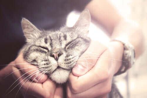 En Arkadaş Canlısı Kedi Irkları Nelerdir?