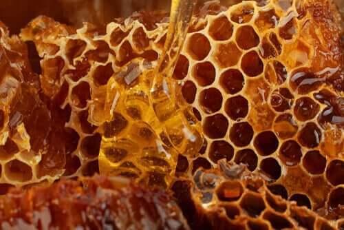 arı ürünleri