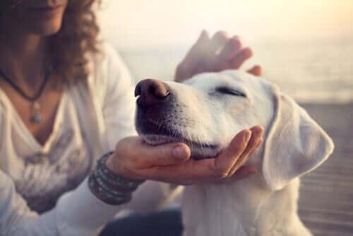 Bilimsel Çalışmalar ve Köpeklerin Özel Yetenekleri