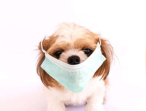 En Bulaşıcı 6 Köpek Hastalığı