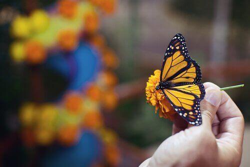 renkli kelebek