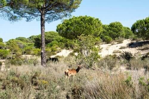 Natura 2000 Çevre Koruma Ağı