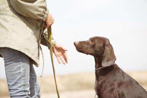 eğitim gören köpek