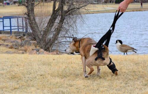 sahilde gezen hasta köpek ve böbrek hastası köpekler