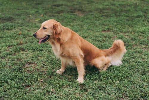 Böbrek Hastası Köpekler İçin Diyetler