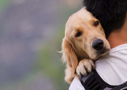 Hayvan Hakları ve Hayvanları Koruma Yasaları: Onların Geleceğini İlgilendiren Sorunlar