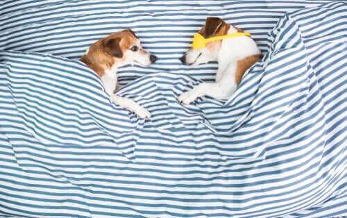 yatakta yatan köpekler