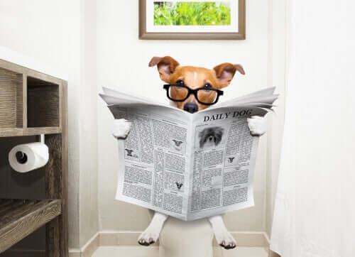 Köpeklerde İshal Nasıl Durdurulur?