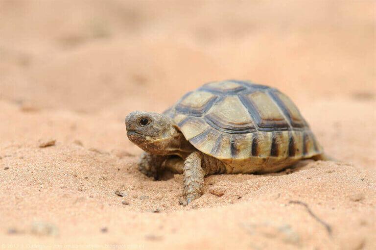 İspanya'daki Kaplumbağalar: Büyülü Dünyaları