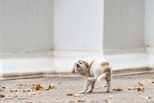Yavru Köpeklerde Uyuz: Sebepleri ve Belirtileri