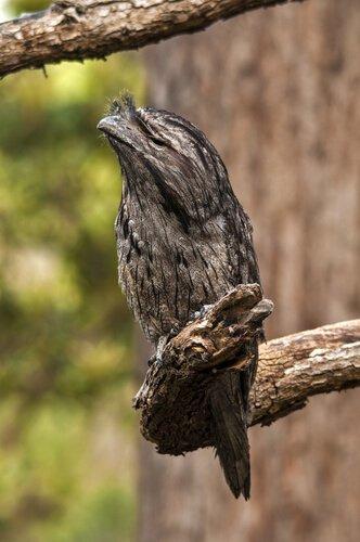 dalda tüneyen bir kuş