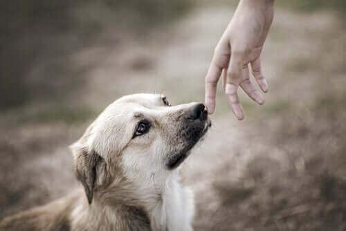 köpeklerin özel koku yeteneği