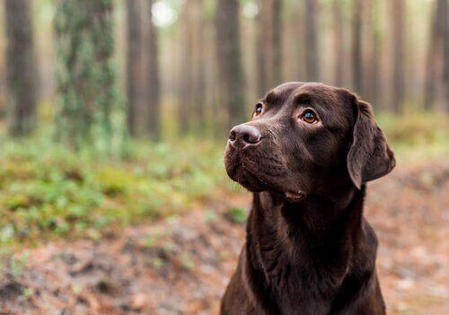 Bir Köpeğin Rengi Yaşam Beklentisini Etkileyebilir