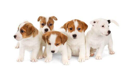 renkli yavru köpekler