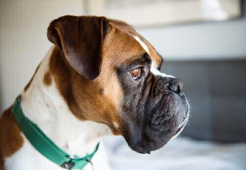 yan profilden köpek kafası