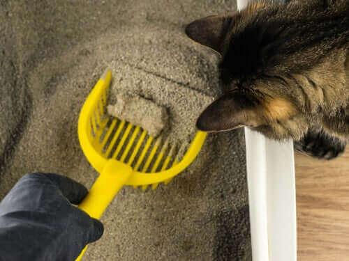 kedi kum kutusu