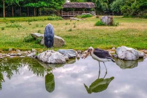 murabut kuşu