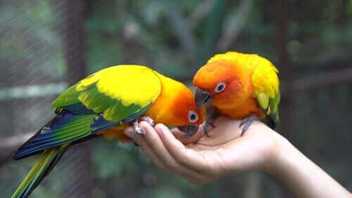 papağan beslenmesi