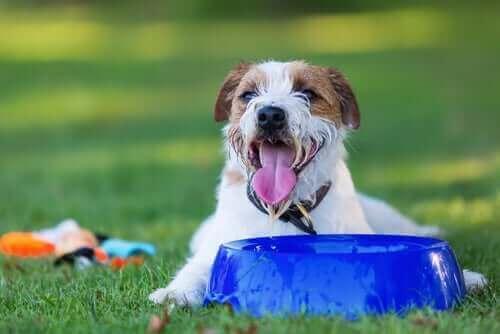köpeklerde aşırı su tüketimi
