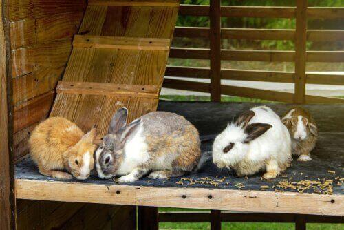 tavşan evi içinde dört tavşan