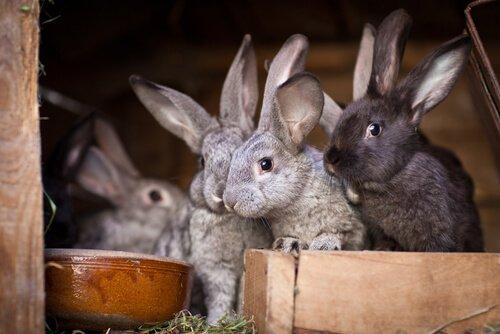 tavşan kafesi boyutları ne olmalıdır?