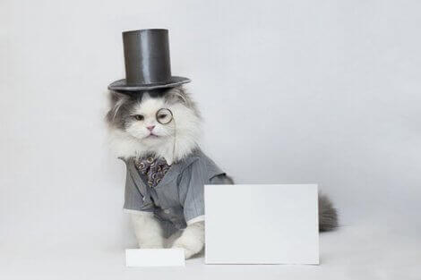 ünlü kedi