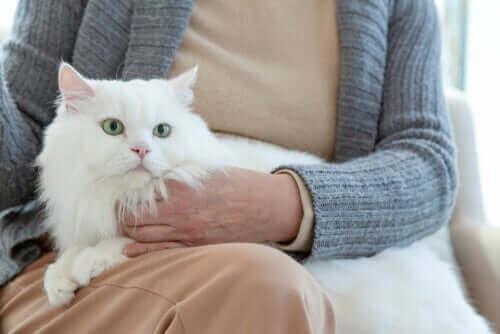 Yaşlılık Kedinizin Davranışını Nasıl Etkiler?