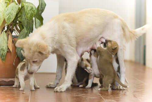 yavrularını emziren anne