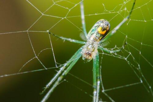 Ağdaki örümcek