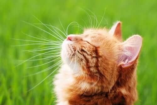Kedi Bağışıklık Sistemi Güçlendirme