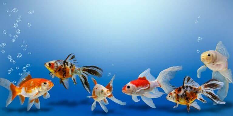 suda yüzen balıklar ve akvaryum