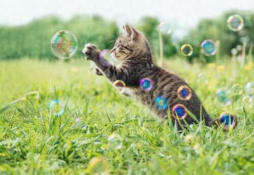 baloncuklarla oynayan kedi