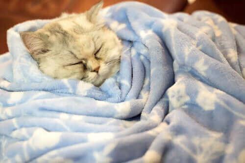 Gerçekleri Keşfedin: Kışın Kediler Kış Uykusuna Yatar mı?