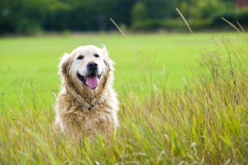 Cennetteki Köpeğime Mektup
