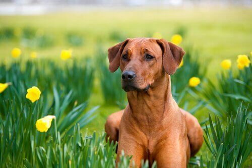Köpekler için Doğal İlaçlar