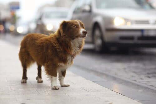 Evcil Hayvan Hırsızlığı - Başınıza Gelirse Ne Yapmalı?