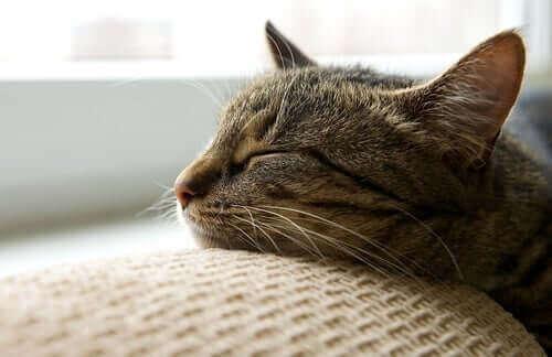 kedi evde uyuyor