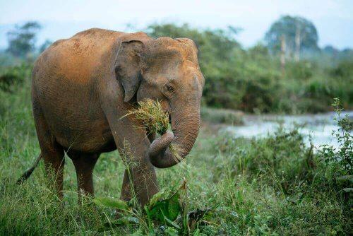 fillerin medeniyetteki rolü