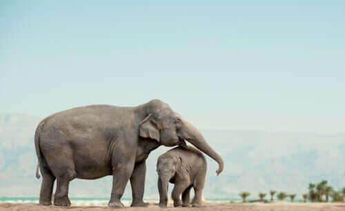 Sosyal Hayvanlar: Filller Hakkında