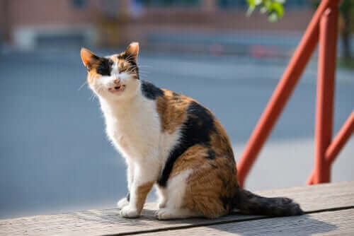 güneşte oturan kedi