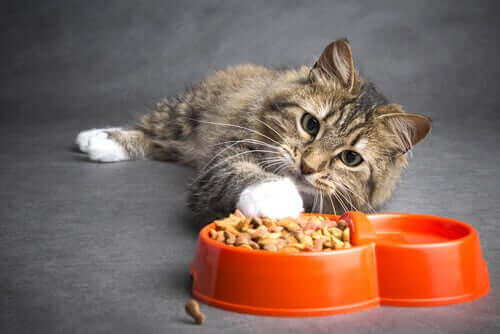 Diyet Tavsiyesi: Kanserli Kediler için Beslenme
