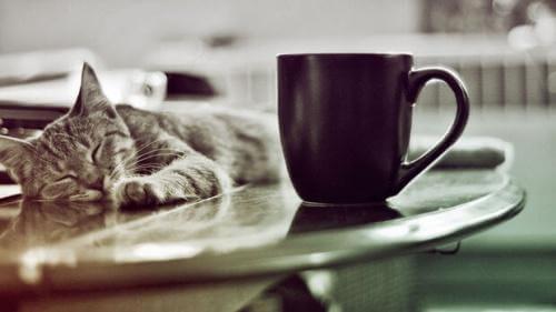 kedi kafeleri