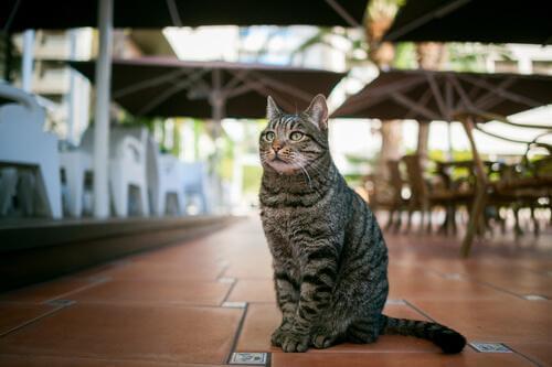 Kedi Kafeteryası: Kendinizi Kedilerle Donatacağınız Yer