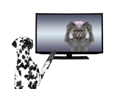 Hayvanların Oynadığı Reklamlar
