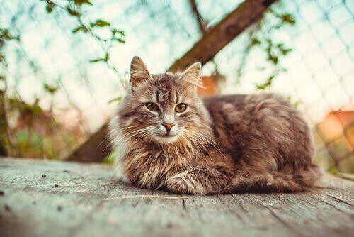 yaz aylarında kedi tüyü